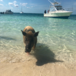 Vacation to the Abacos - Air Unlimited